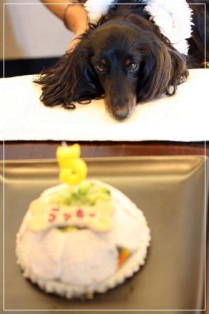 ラッキーケーキ.jpg
